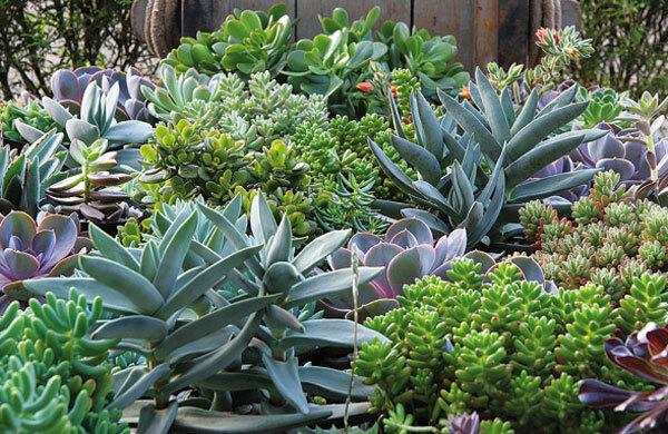 flores e jardins fotos:HORTA EM PEQUENOS ESPAÇOS
